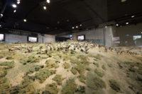 New Zealand - Wellington Great War Exhibition